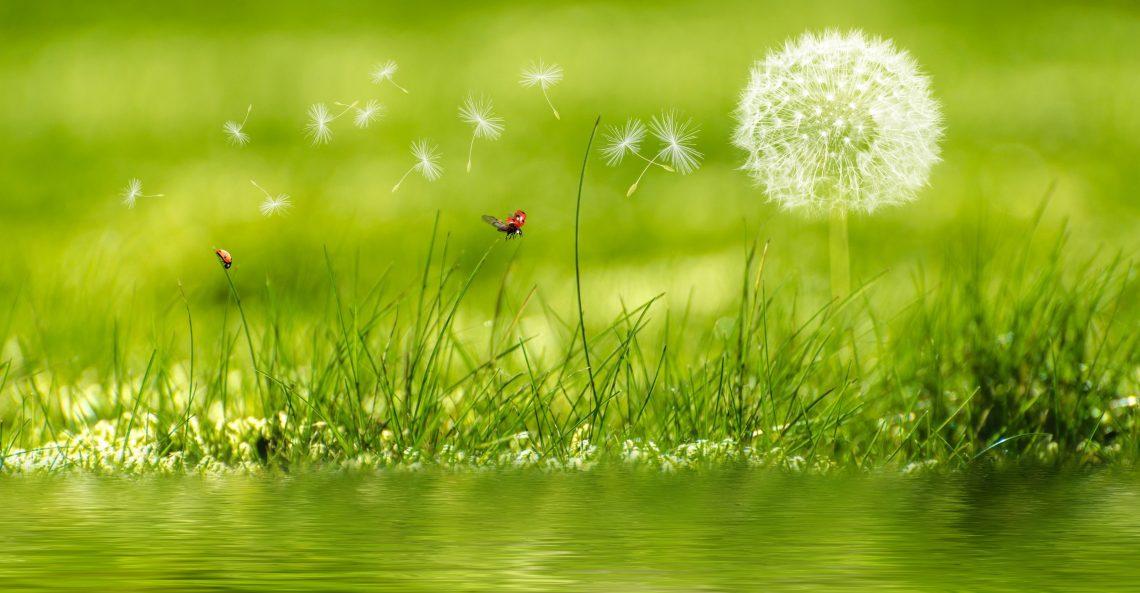 nature combattre le stress